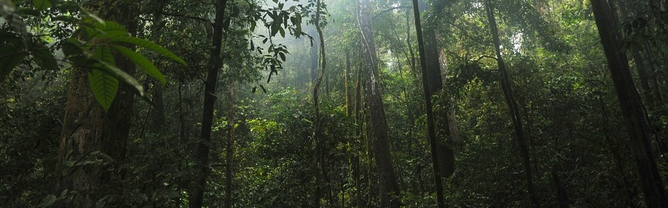 Into the Rainforest